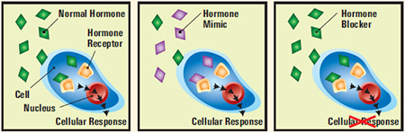 natural male hormone replacement therapy