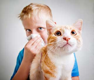 boy sneezing and a cat