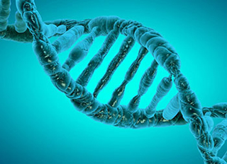 Image result for Epigenetics