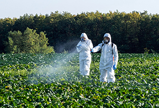 Two workers spraying pesticide on field with harvest