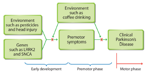 Some of the risk factors and premotor symptoms that may be involved in Parkinson's