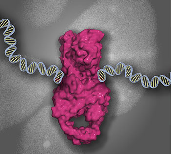 TOP2 DNA-protein cross-link bound to DNA