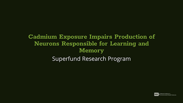 Cadmium Exposure Impairs Production of Neurons in