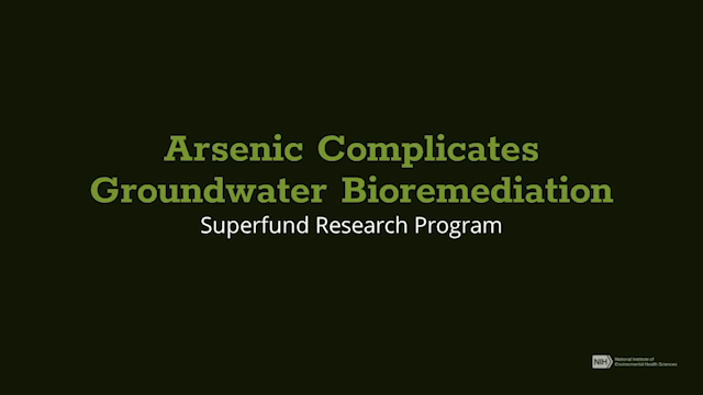 Arsenic Complicates Groundwater Bioremediation