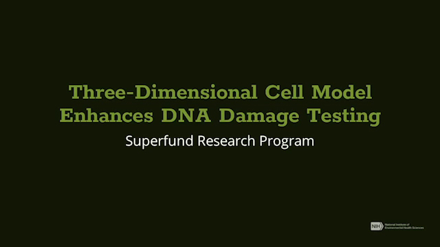 Three-Dimensional Cell Model Enhances DNA Damage Testing