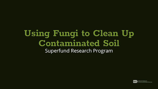 Using Fungi to Clean Up Contaminated Soil