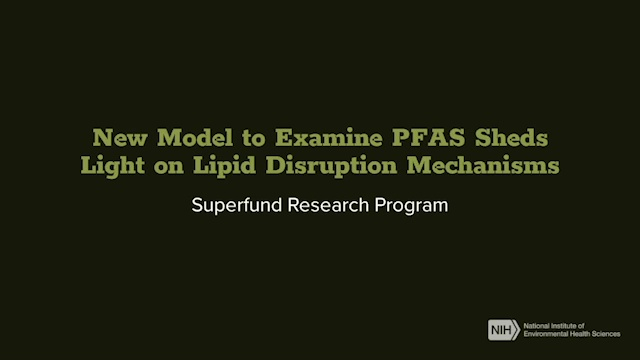 New Model to Examine PFAS Sheds Light on Lipid Disruption Mechanisms