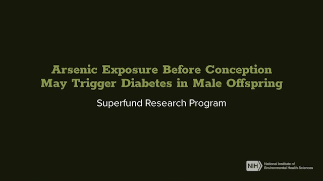 Superfund Research Program - Arsenic Exposure Before Conception May Trigger Diabetes in Male Offspring