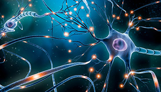 neuronal network electrical activity