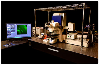 Zeiss LSM 510 upright confocal microscope