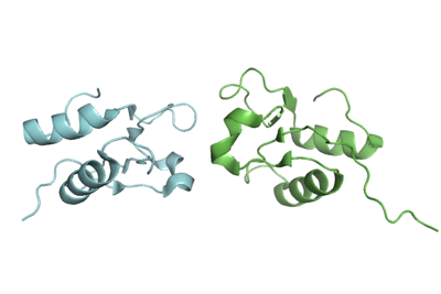 DNA ligase III-alpha BRCT domain