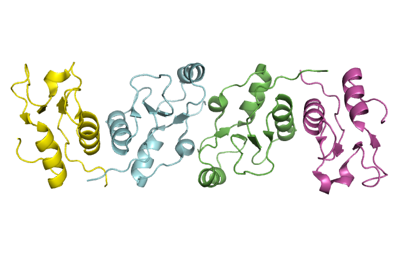 complex of XRCC1 and DNA ligase III-alpha BRCT domain