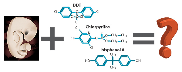 [An image of a fetus] + [a group of chemicals (their structures for bisphenol A, chlorpyrifos as a representative organophosphate, and DDT)] = [a big question mark]