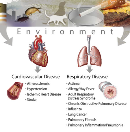 image for respiratory and cardiovascular diseases