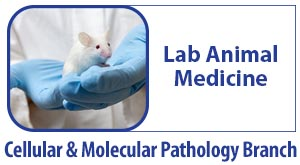 CMPB Lab Animal Medicine - An image of mouse in a scientist's hands