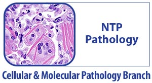 CMPB NTP Pathology - Microscopic Cells