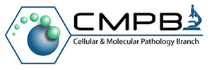 CMPB:  Cellular & Molecular Pathology Branch