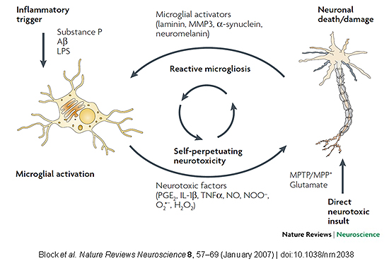 This figure shows how direct neurotoxic insults or inflammatory triggers (indirect neurotoxic insults) can generate a vicious cycle of cytotoxic and stimulatory factors that leads to low-grade, chronic neuroinflammation and progressive neuronal damage and degeneration over time.
