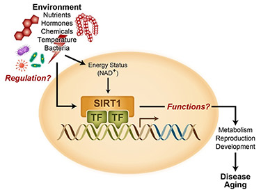 The illustration provides an overview of the research performed by members of the Metabolism, Genes, and Environment Group.