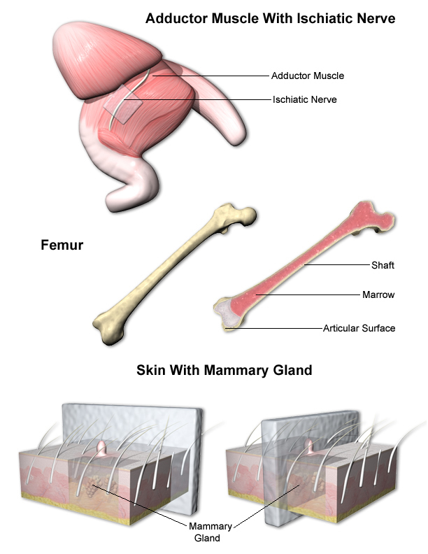Mammary Gland and Skin trimming examples