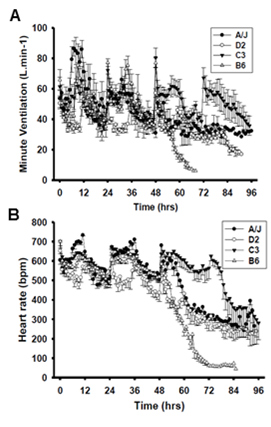 Differential minute ventilation (A) and heart rate (B) responses to hyperoxia in 4 inbred strains of mice
