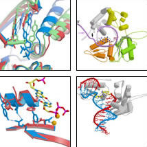 Enzymology & Structure of DNA Polymerase β