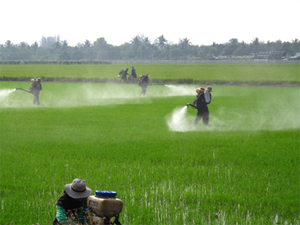 Workers using pesticide on crops.