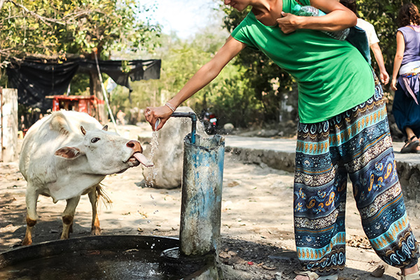 woman and cow at a well