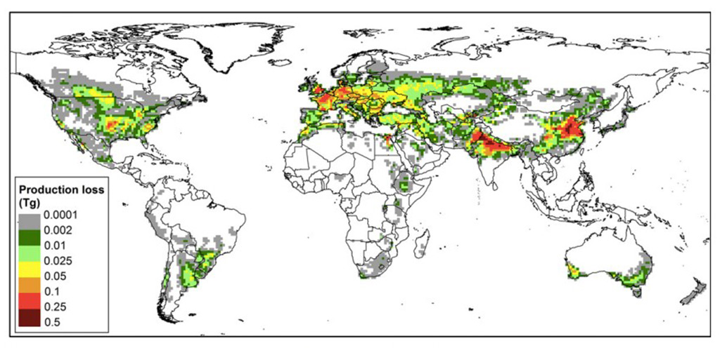Graphic of world map showing color coded production loss for wheat