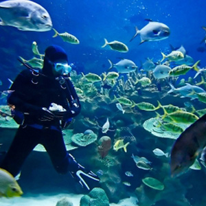 Scuba diver underwater with several fish