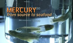Mercury from source to seafood
