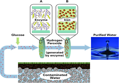 This figure depicts an example of the method used by Bhattacharyya for water purification using stacked functionalized synthetic membranes.