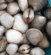 Image of cockle clams