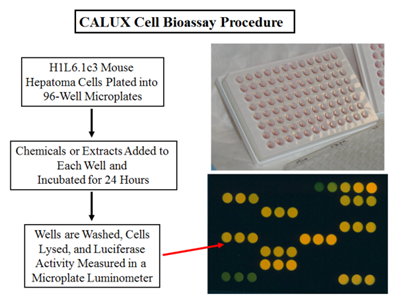 CALUX bioassay procedure
