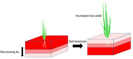 Soil Inversion and Increased Rice Yield