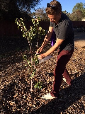 Andrew Cooper, Ph.D., collects plant tissues from a fruit tree in the community garden.