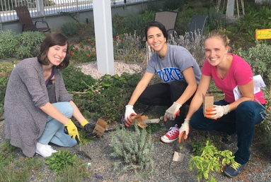 Three graduate students tending to a community garden