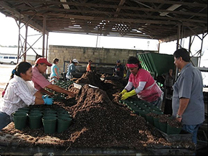 Farm workers filling pots with soil