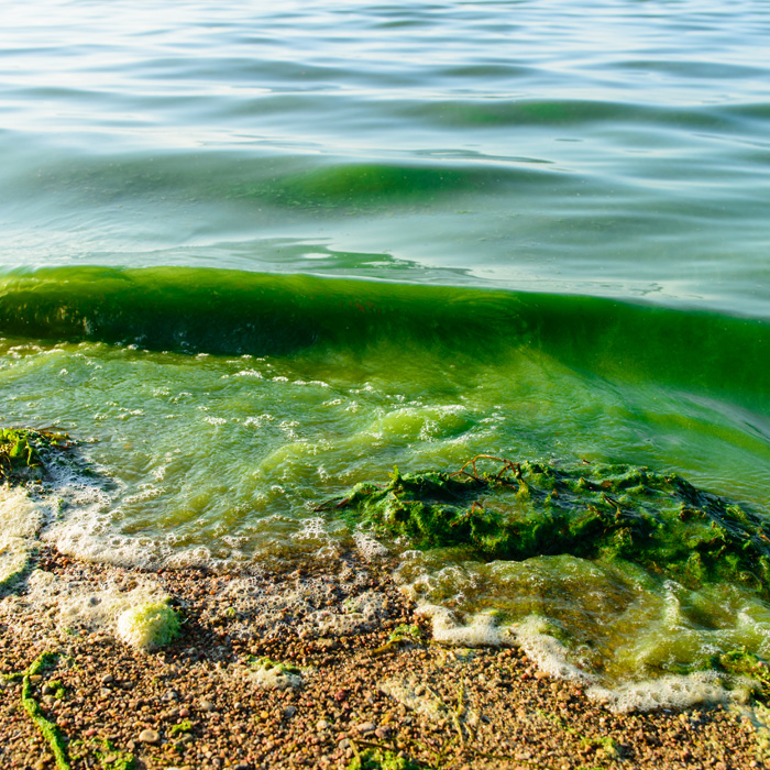 Algal Blooms Image