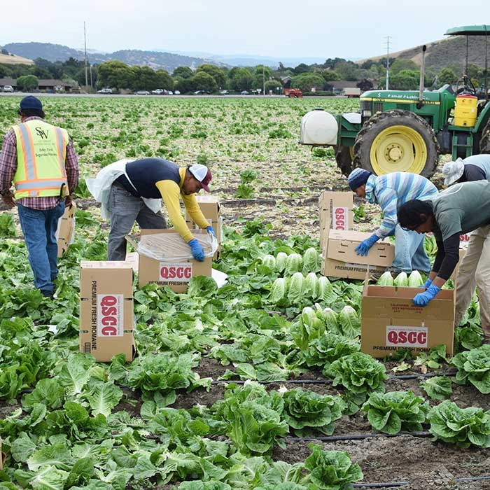migrant workers farming