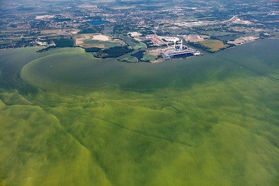 Aerial view of harmful algal bloom of Lake Erie